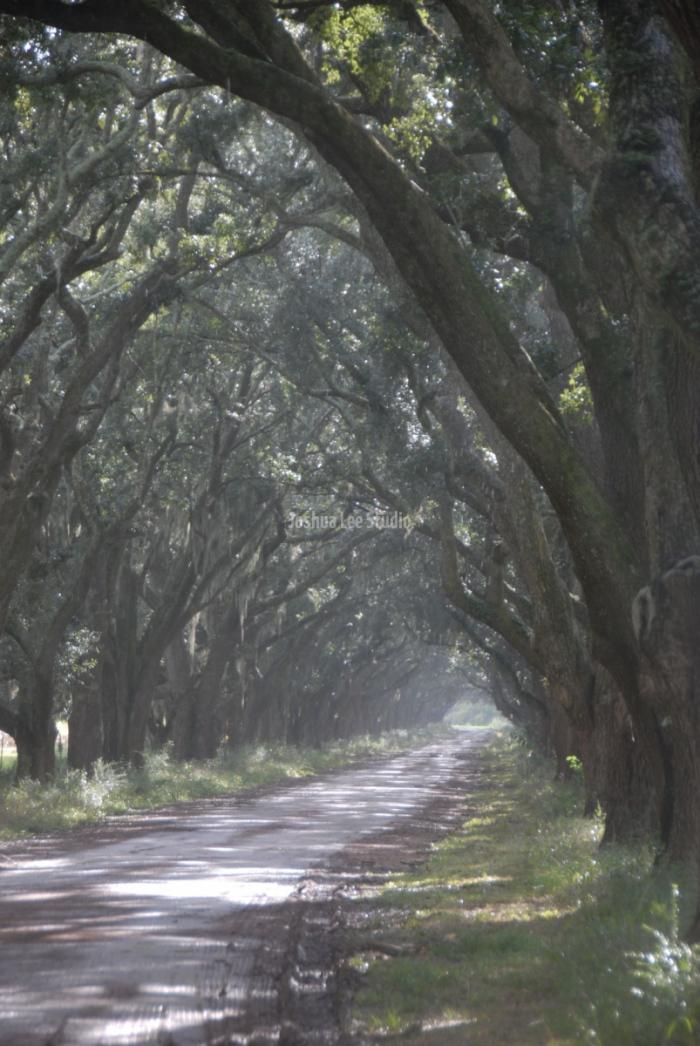 Plantation-Road-P