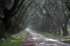 Plantation-Road-L