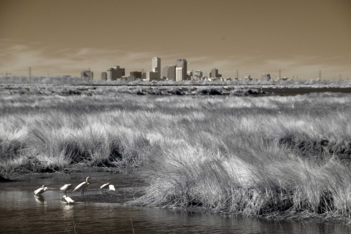 IR-Urban-Birds