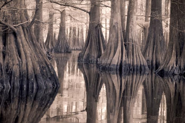 Swamp-Stumps