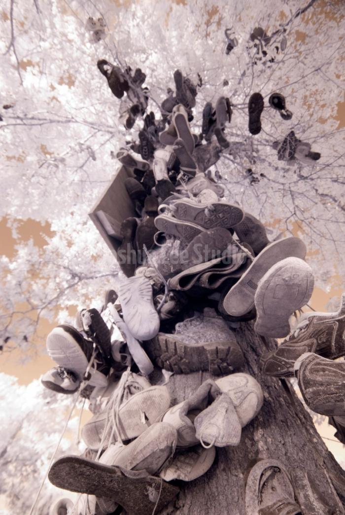 Tree-Of-Soles